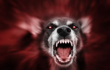 aggressive dog with open mouth